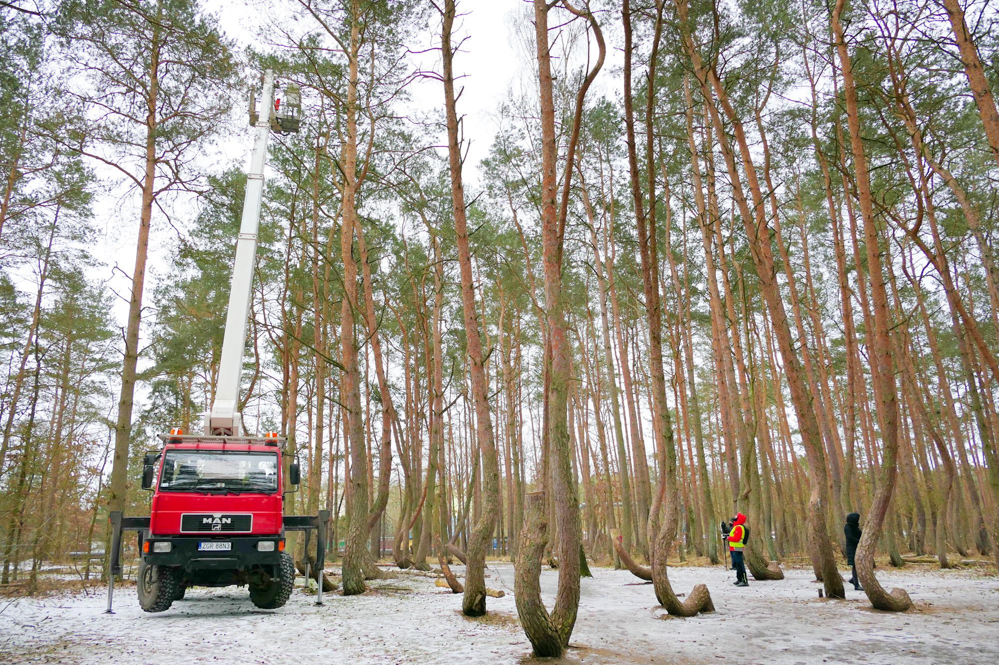 pge-wspiera-utworzenie-dwoch-nowych-plantacji-drzew-z-krzywego-lasu_2.jpg